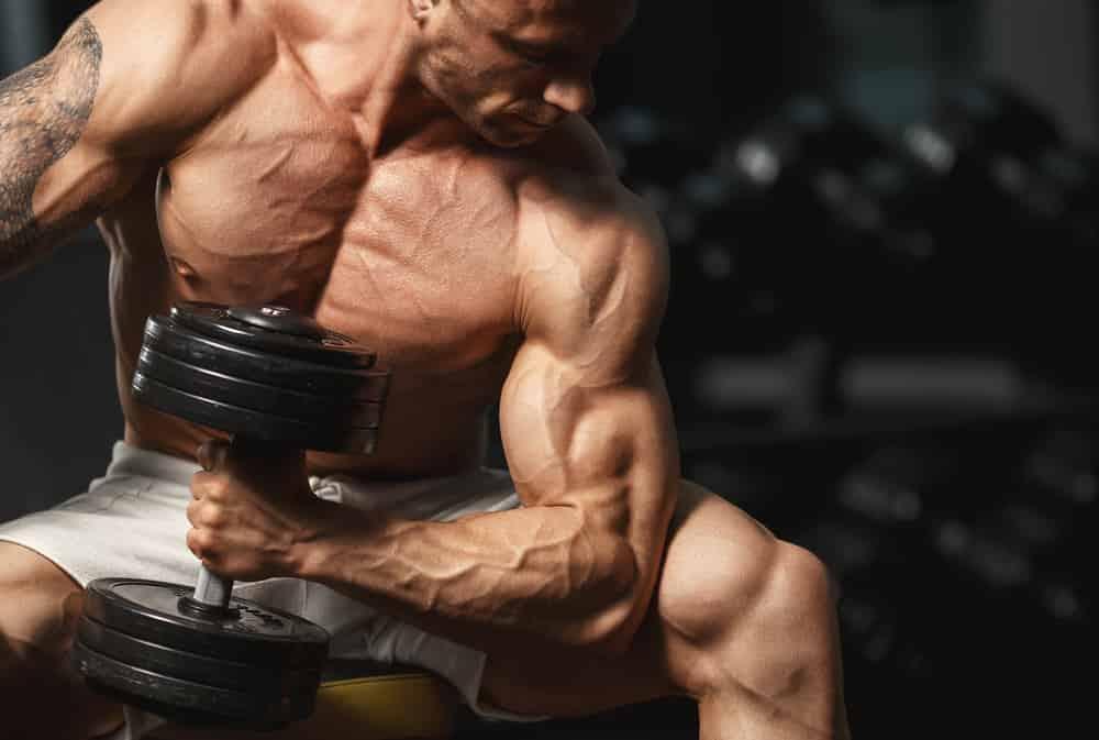 ratios ganancia muscular
